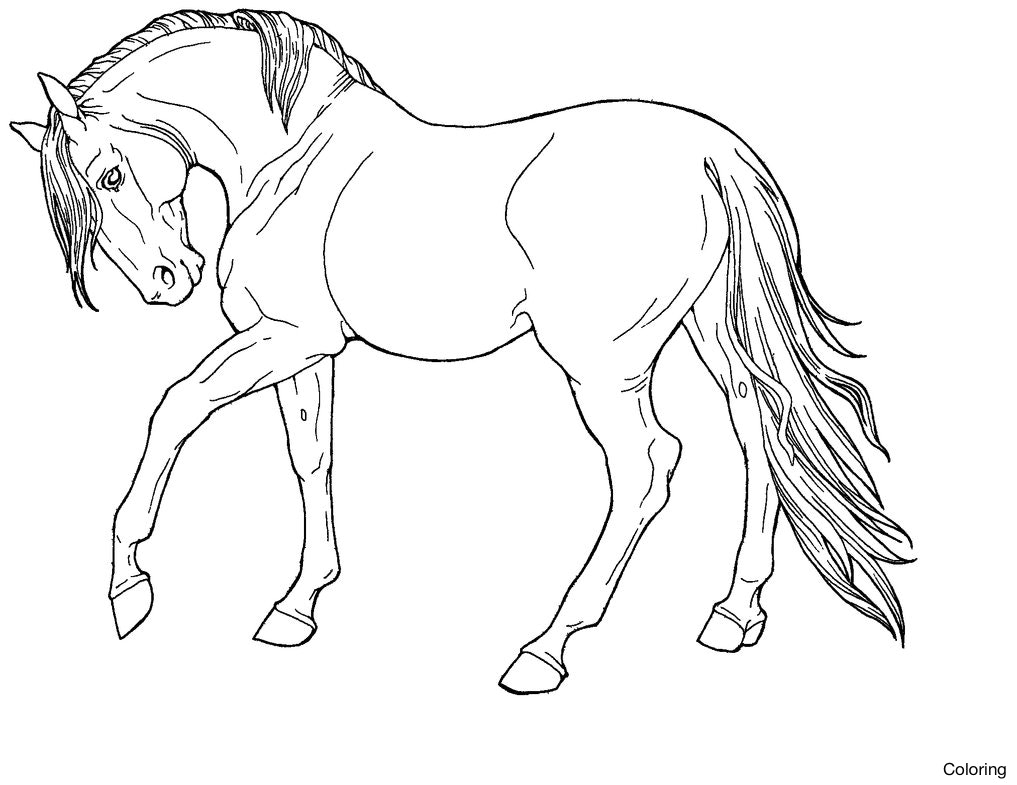 1017x785 Epic Realistic Horse Coloring Pages 45 For Your Kids With Drawing