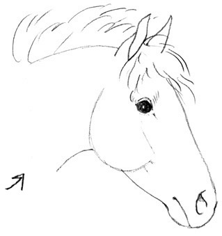 319x339 How To Draw A Horse Head For Kids Free Drawing Instructions