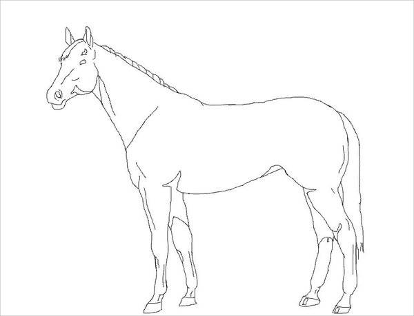 Horse Drawing Outline