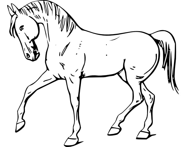 image regarding Horse Template Printable called Horse Drawing Determine at  Cost-free for specific