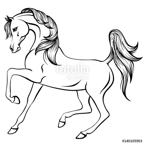500x500 Vector Outline Illustration Of Beautiful Arabian Horse Stock