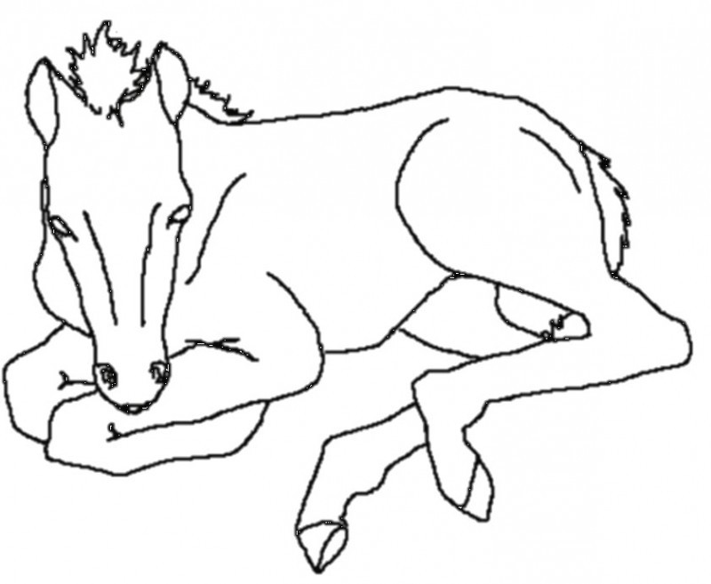 800x657 Horse Head Coloring Page