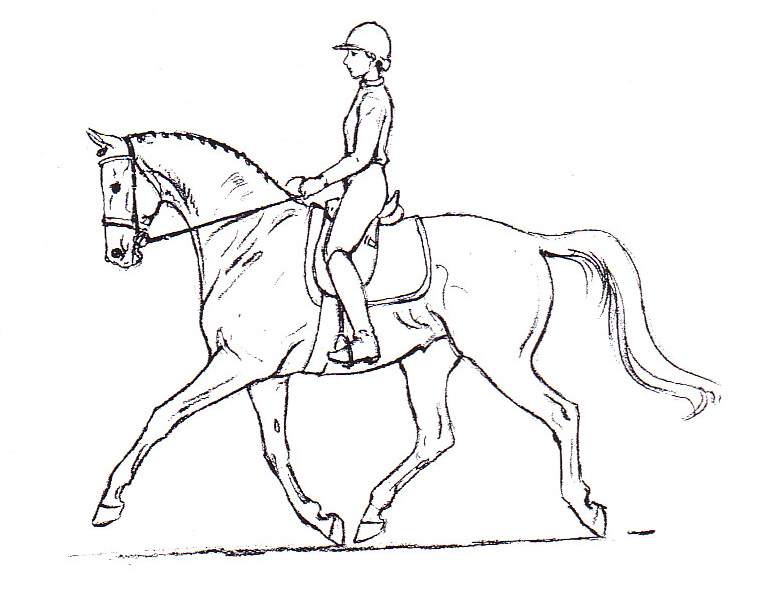 775x598 Drawn Horse Dressage