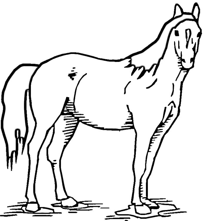 697x750 Horse Standing In Pasture Coloring Page Purple Kitty
