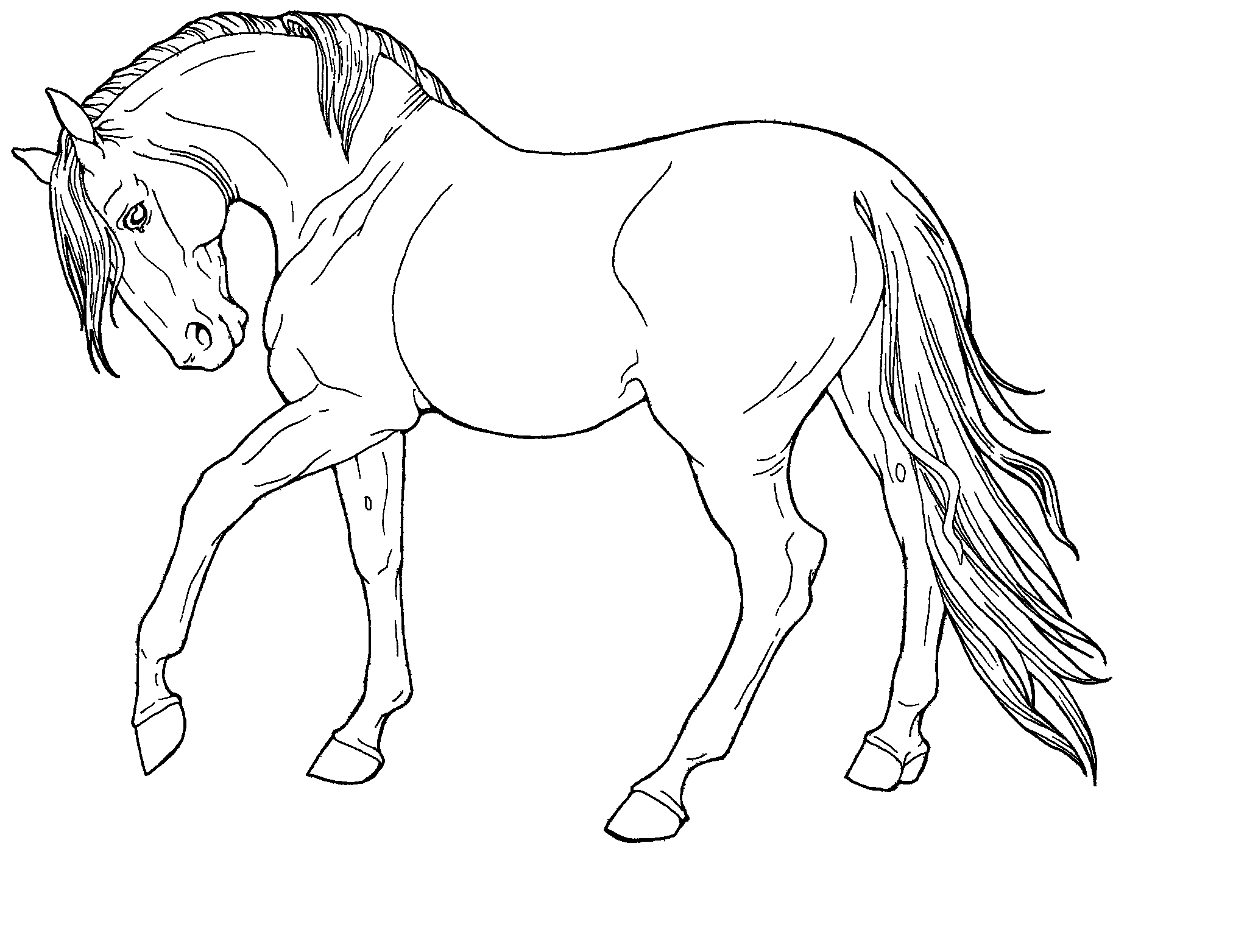 2024x1563 Simple Line Drawing Of A Horse Line Drawings Of Animals Free
