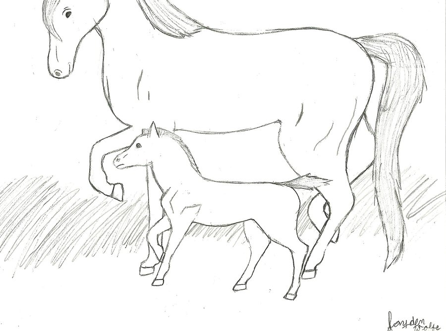 900x668 Mom And Baby Horse Line Art By Toboegirl55