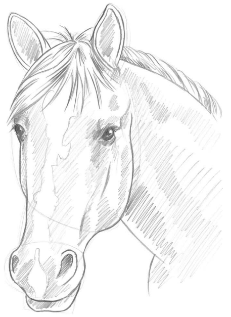 Horse Drawing Realistic