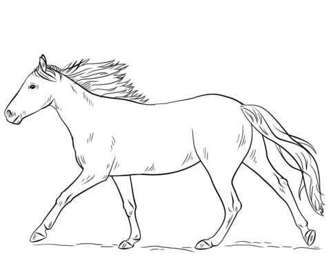 480x376 Running Horse Coloring Page Free Printable Coloring Pages