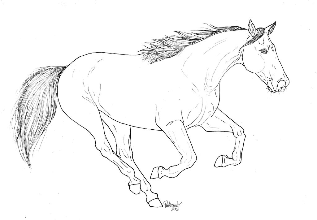 1024x711 Running Horse Lineart For Free Use. By Mynameisphantomrider