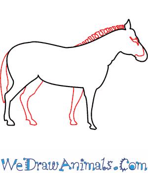 300x350 How To Draw A Zebra
