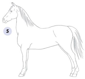 350x322 Learn How To Draw A Horse