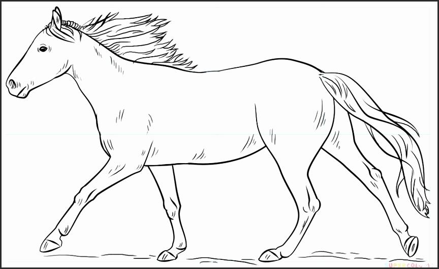 864x531 Steps To Draw A Horse Head Ktegc Beautiful Draw Cartoon Horses