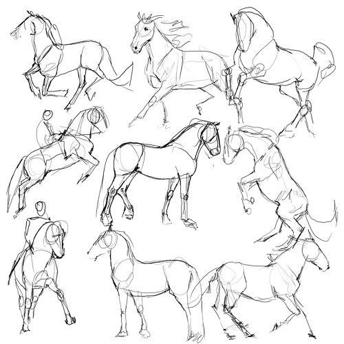 500x500 Horse Drawing Tutorial