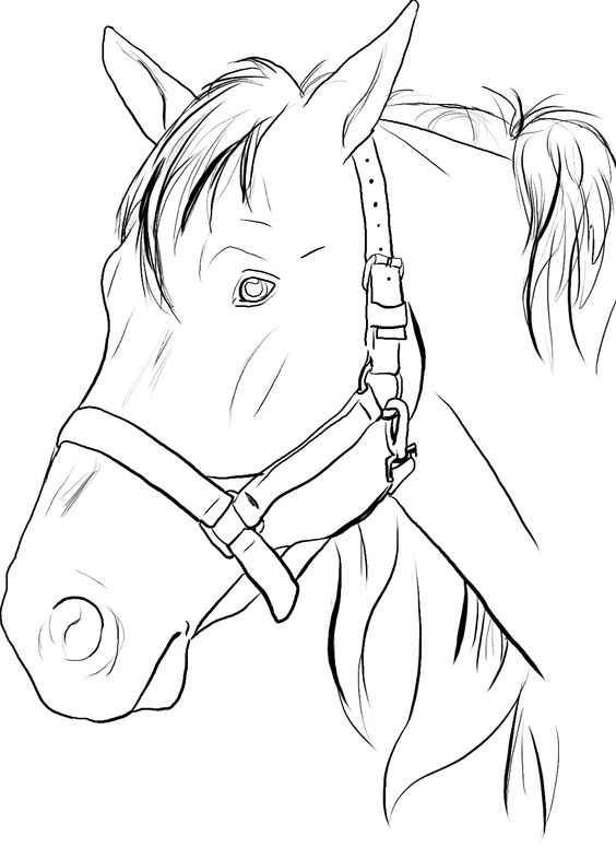 564x776 Horse Face Coloring Page 436746