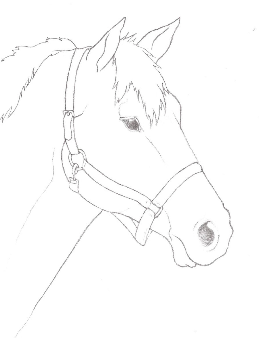 900x1176 Horse Face Drawing Step By Step Horse Head Outline Free Download