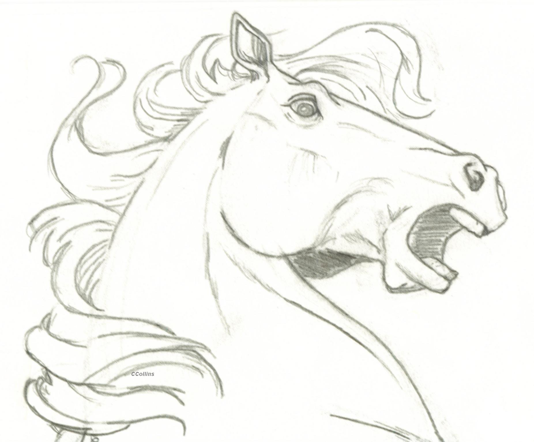 1852x1532 How To Draw A Horse Face