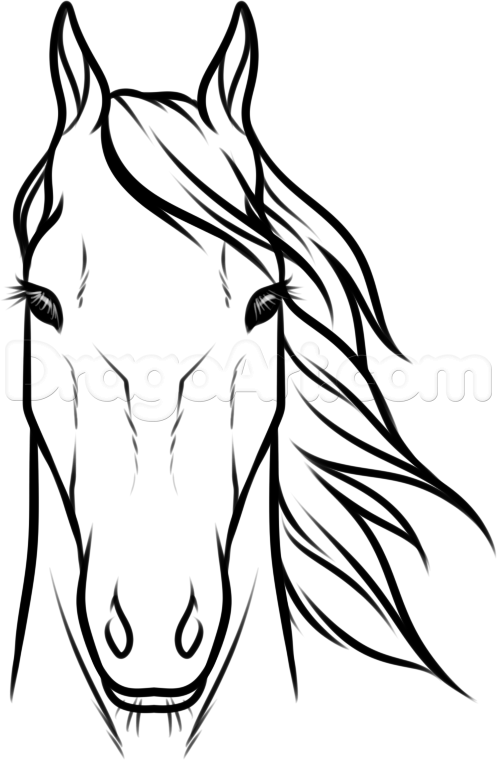 497x760 draw horse heads and faces step 8 carving pinterest horse