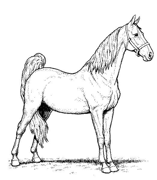 523x601 Horse