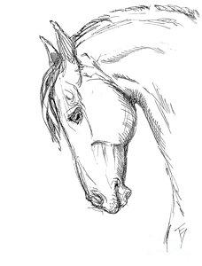 228x300 Horse Head Drawing Drawings