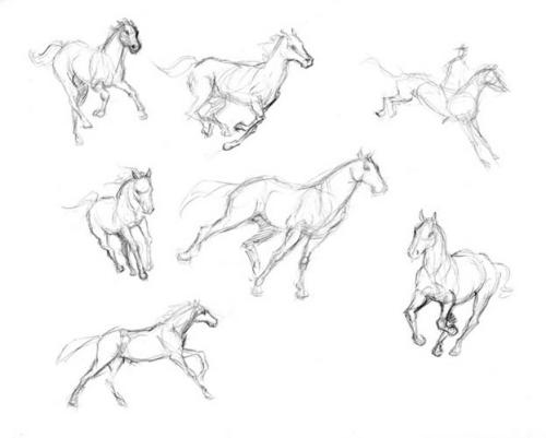 500x401 Horses In Action