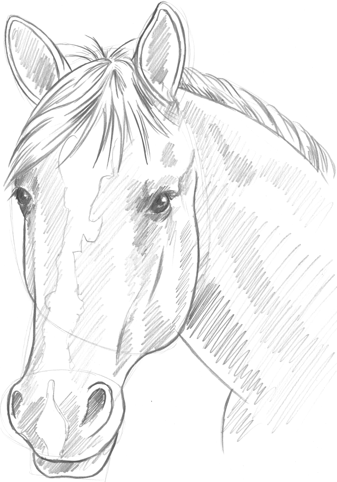 1080x1544 2.2.a16 Frontal View Of A Horse's Head