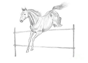 300x213 Horse Gallop Drawings