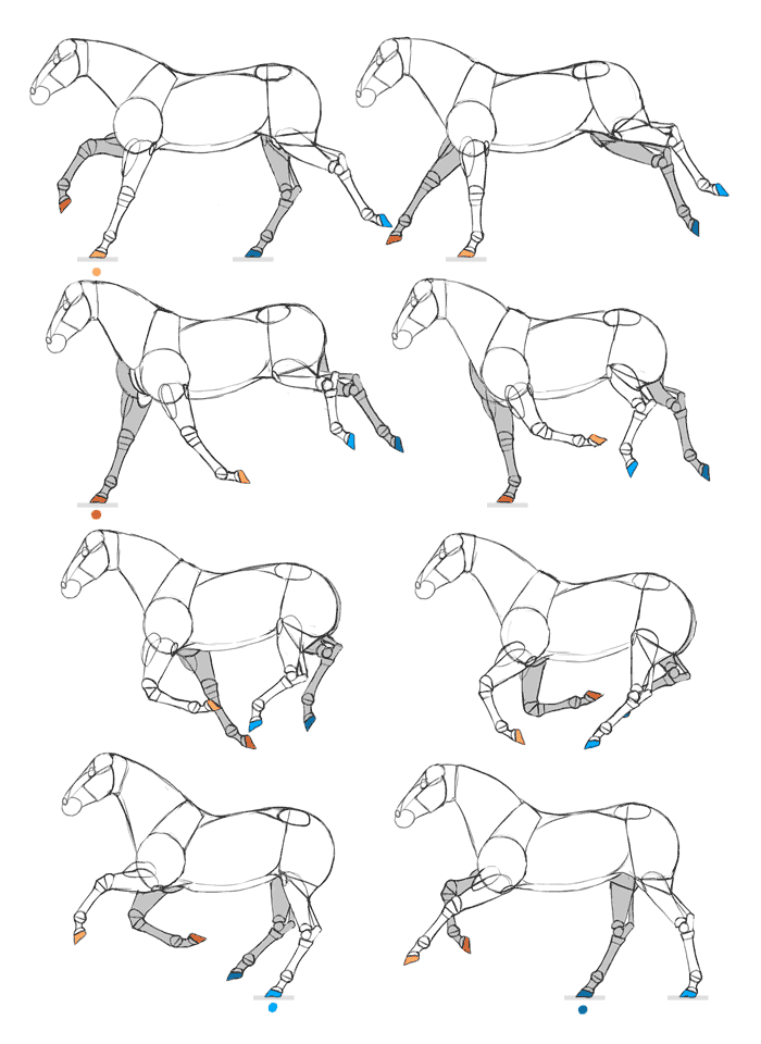 700x960 How To Draw And Animate Horses From Trot To Gallup
