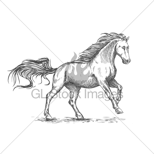 500x500 Running Galloping White Horse Sketch Portrait Gl Stock Images
