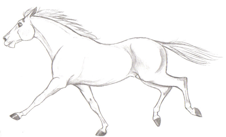 791x480 Galloping Horse By Pookyhorse