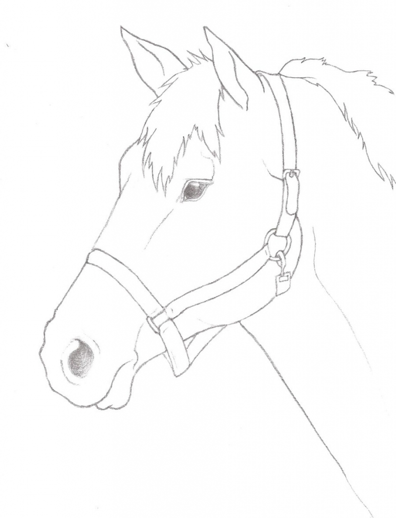 783x1024 Horse Head Drawing Pencil Horse Head Outline Night2732