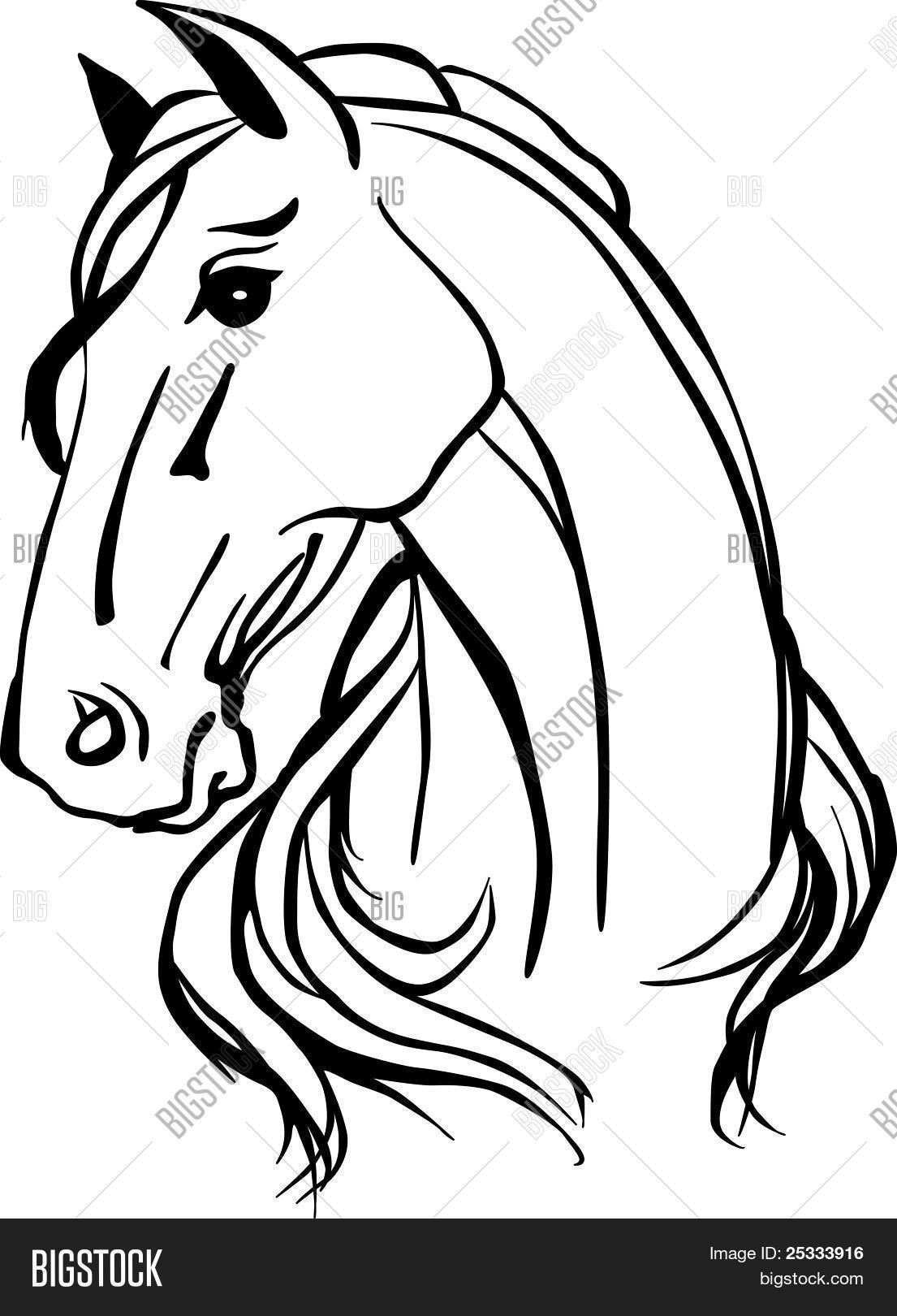 1105x1620 Horse Head Images, Illustrations, Vectors