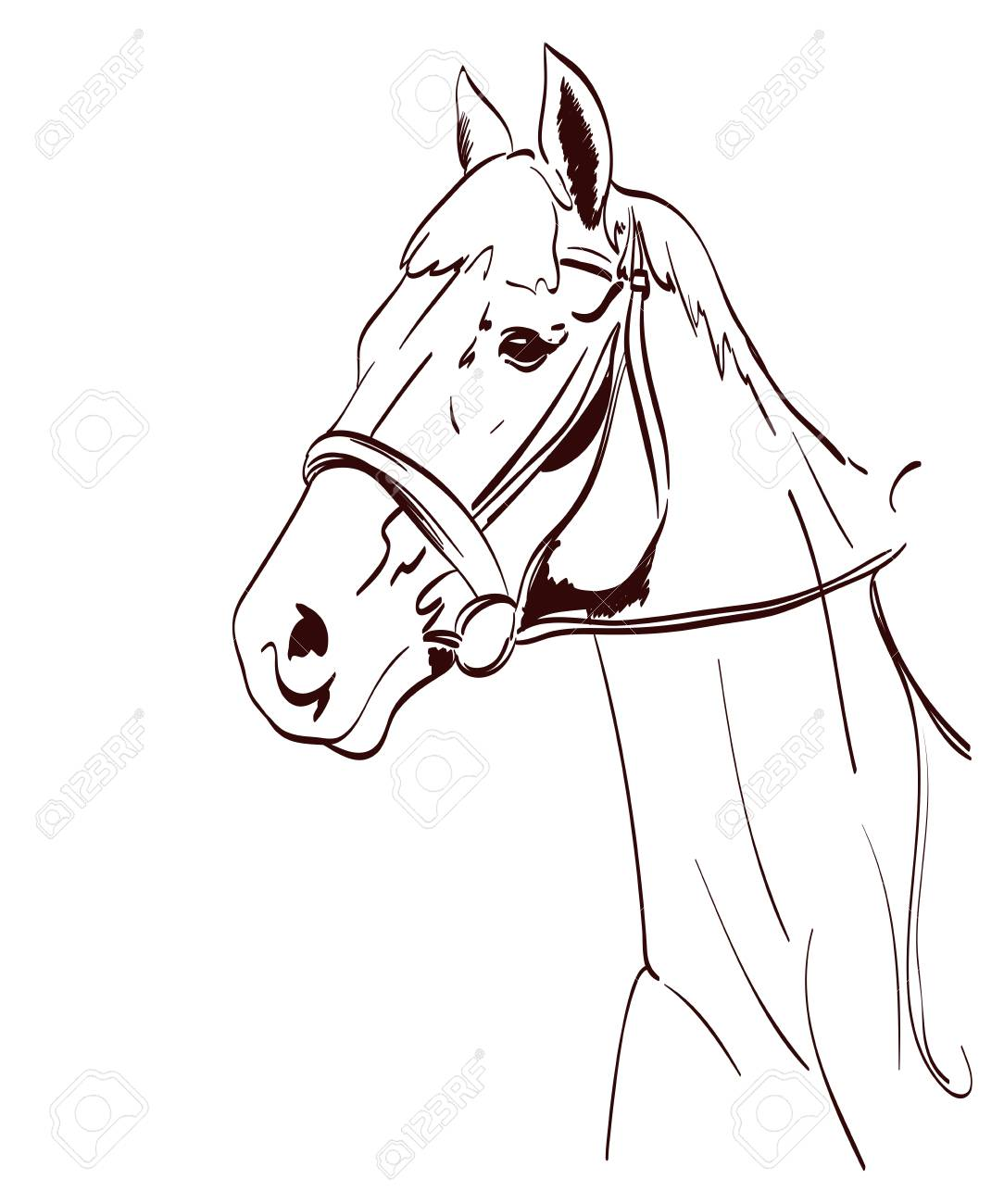 1084x1300 Horse Head Vector Illustration In Line Art Style. Equestrian
