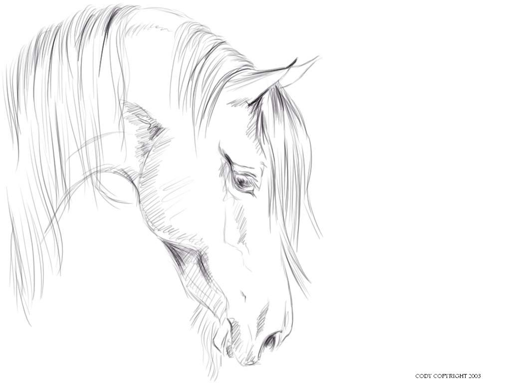 1024x768 Natari Horse Head Sketch By Cruel Intentions