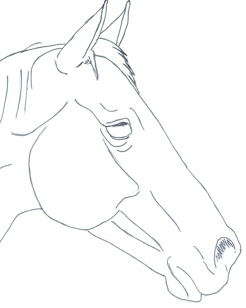 800x1000 Simple Horse Head Drawing