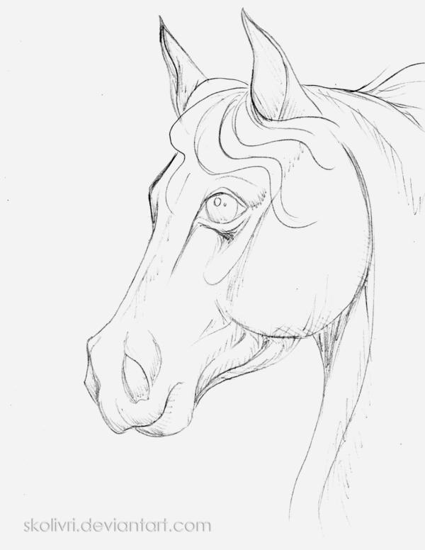 600x776 Horse Head Sketch By Skolivri