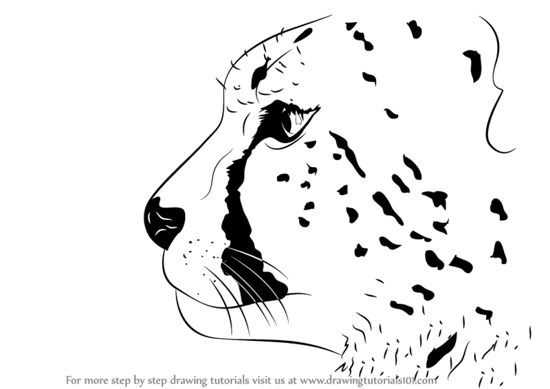 800x566 Learn How To Draw A Cheetah's Head (Big Cats) Step By Step