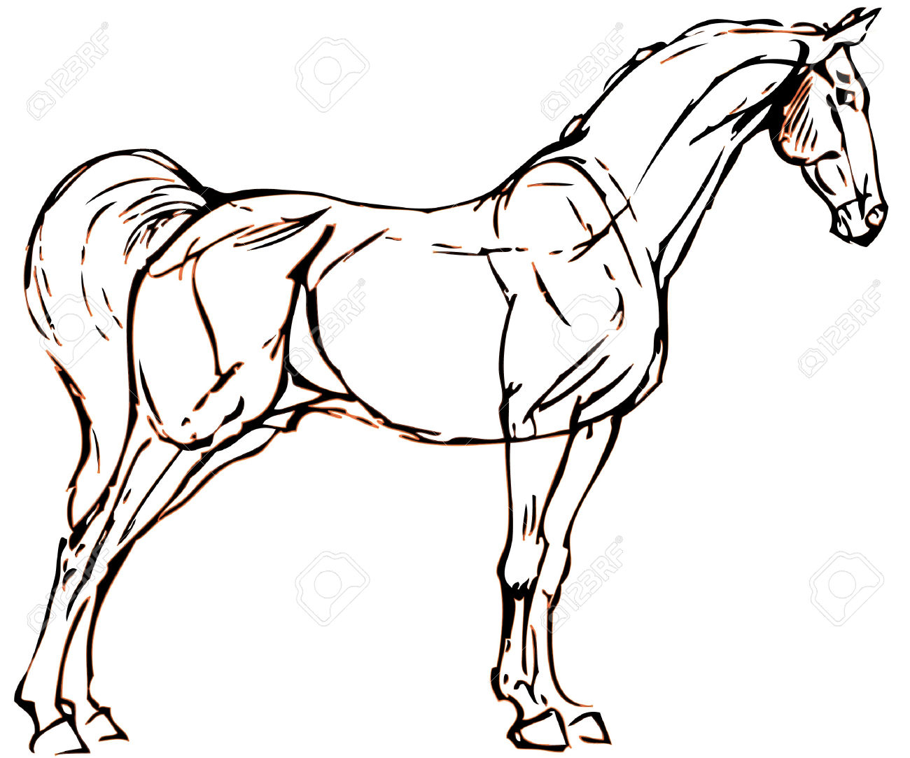 1300x1083 Simple Line Drawing Of A Horse Easy horse drawings Simple Horse