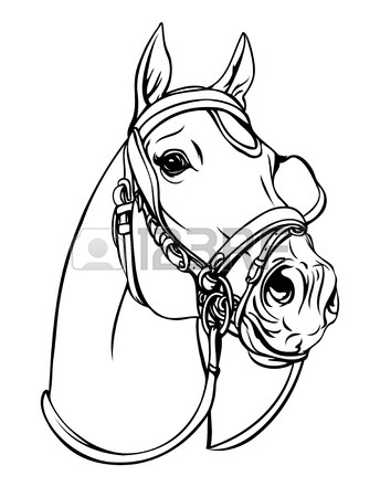 344x450 Horse Head Line Art Drawing. Equestrian Training Theme