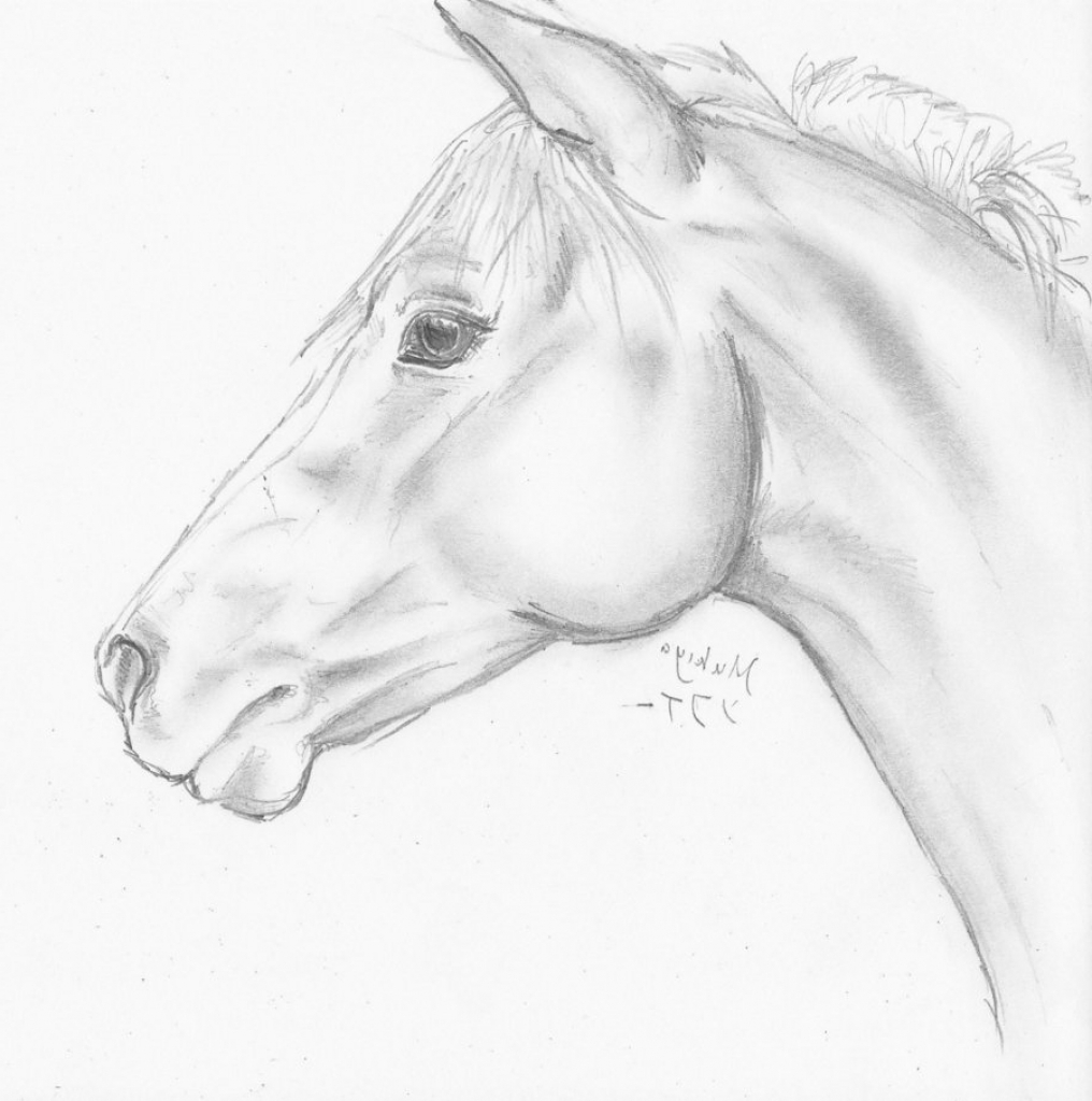 1016x1024 Simple Horse Head Drawing 1000 Ideas About Horse Head Drawing