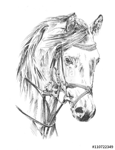 383x500 Freehand Horse Head Pencil Drawing Stock Photo And Royalty Free