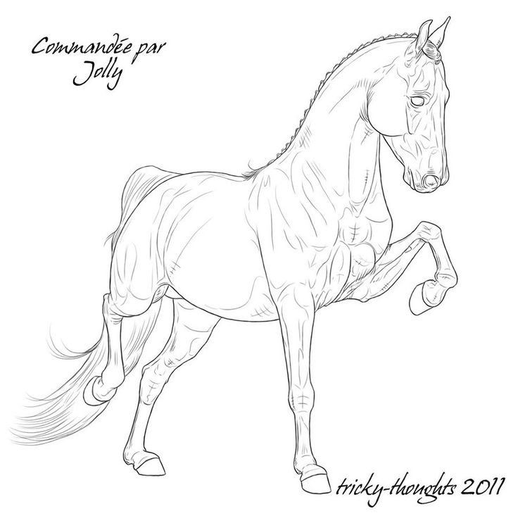 736x736 Drawn Horse Front