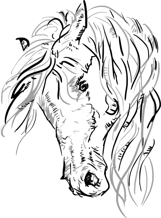 532x720 Free Photo Horse Vector Horsehead Grayscale Sketch