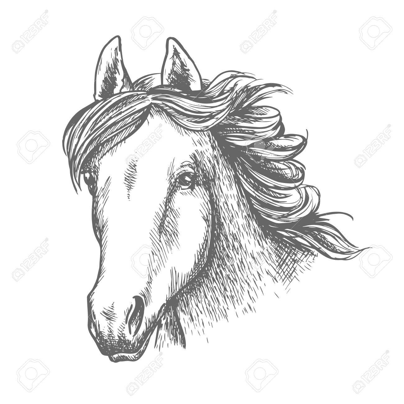 1300x1300 Horse Head Sketch Of Arabian Mare Horse. Isolated Racehorse Head