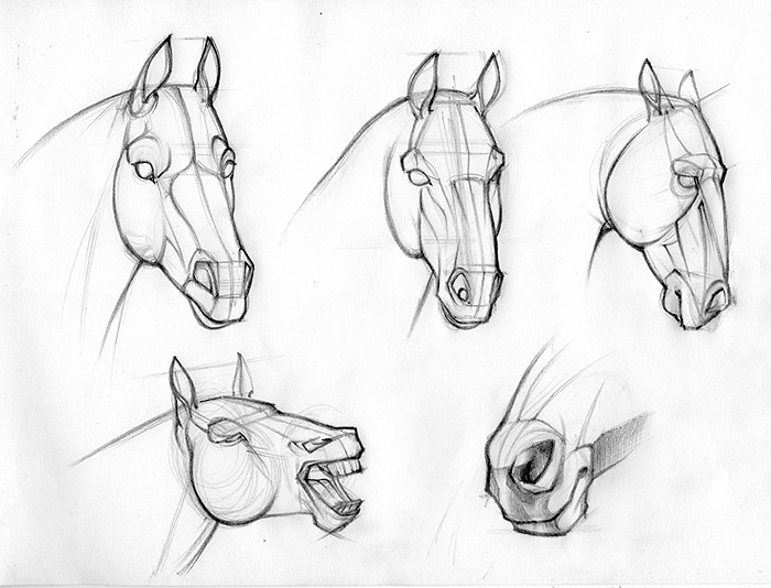 700x534 Horse Head Drawing Tutorial 2531523