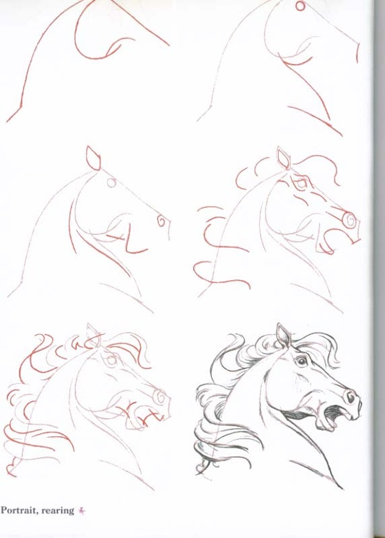 550x768 How To Draw Horses