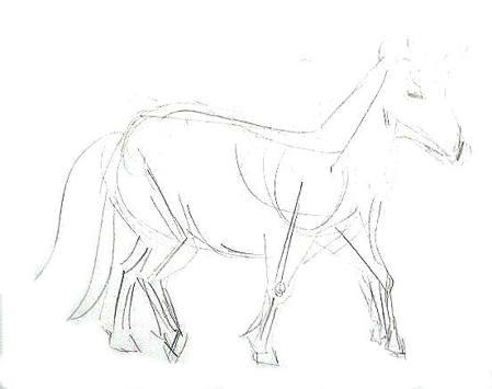 449x355 How To Draw A Realistic Pony