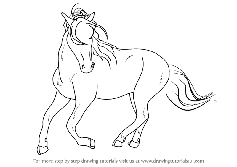 800x565 Learn How To Draw A Barb Horse (Wild Animals) Step By Step