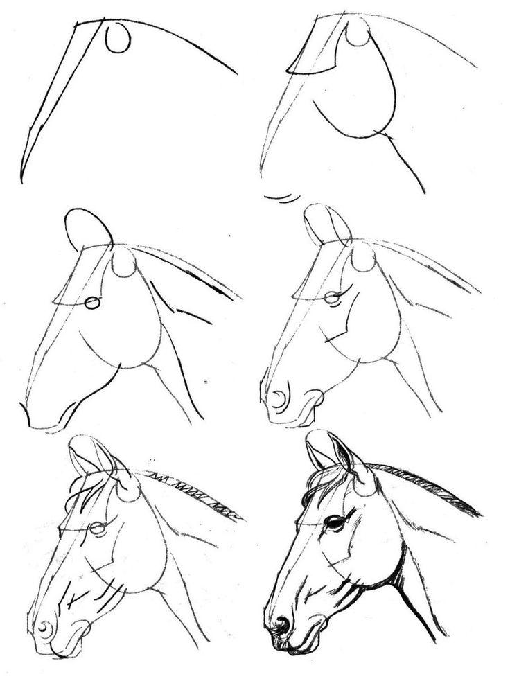 736x980 Horse Head Animals Drawing Tutorials Horse Head