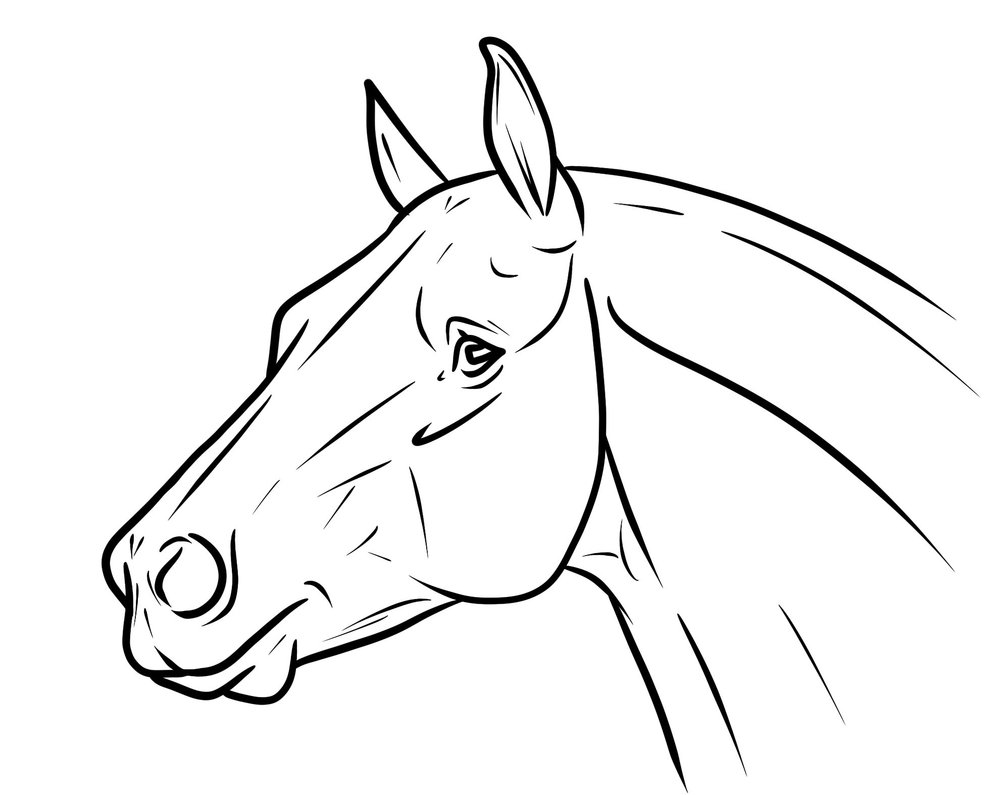Horse Head Images Drawing at GetDrawings.com | Free for personal use ...