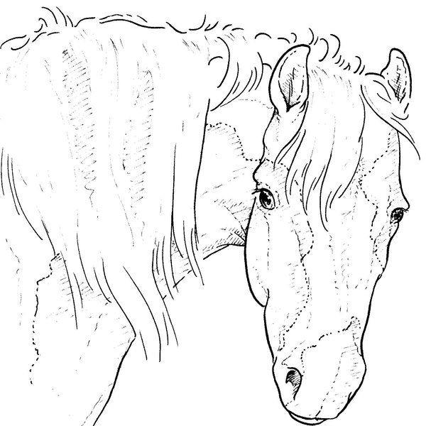 Kleurplaten Paarden En Pony S En Veulens Horse Head Line Drawing At Getdrawings Com Free For
